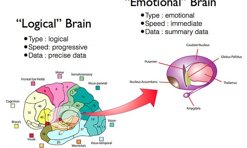Understand the Logical Brain vs Emotional Brain while designing a product