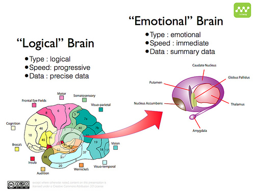 logical brain and emotional brain