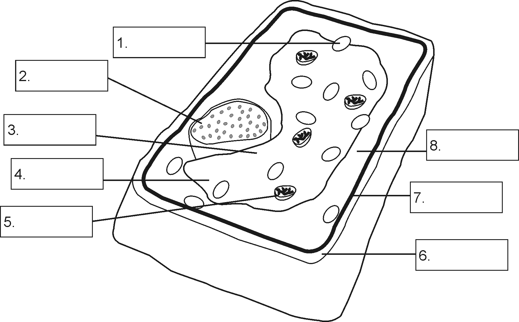 Plant Cell Diagram Without Labels Sketch Coloring Page