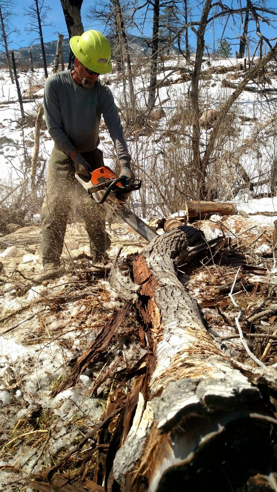 Man with chainsaw cutting a fallen burnt tree