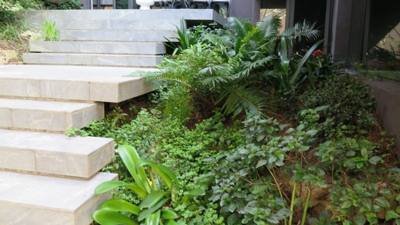 Tiled concrete walkway and indigenous shade plants