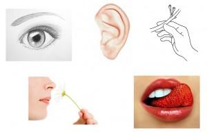 VAKOG notre système sensoriel