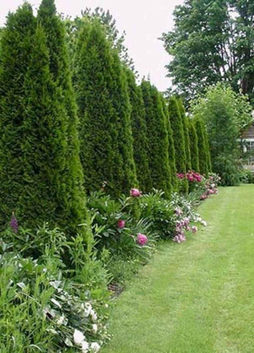 70 Gorgeous Backyard Privacy Fence Decor Ideas on A Budget (46)
