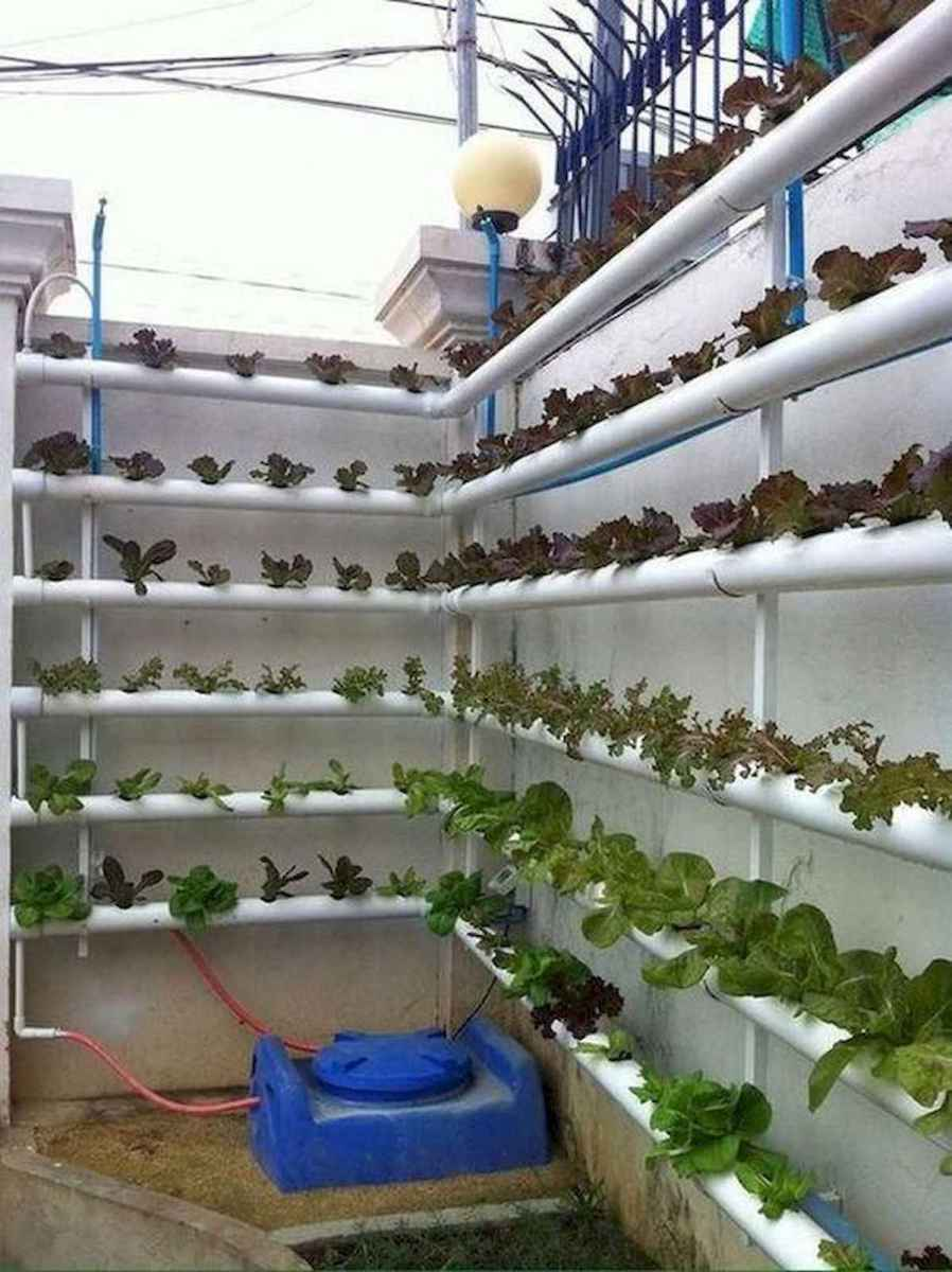 40 Easy To Try Hydroponic Gardening For Beginners Design Ideas And Remodel (23)