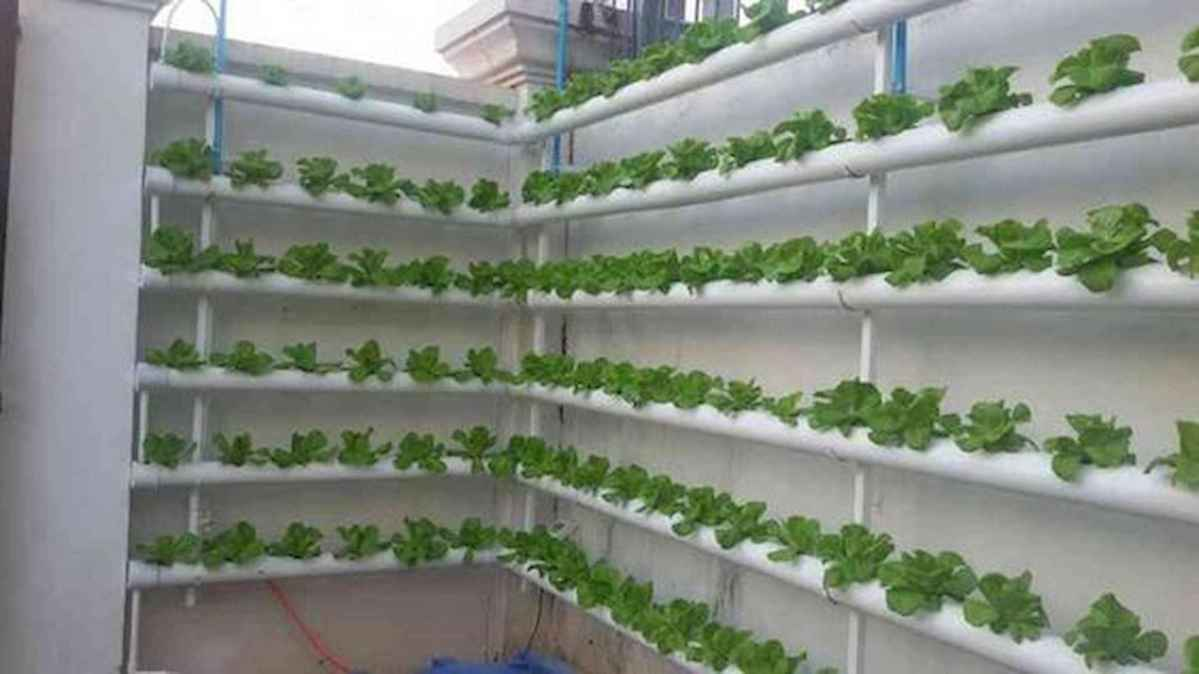 40 Easy To Try Hydroponic Gardening For Beginners Design Ideas And Remodel (24)