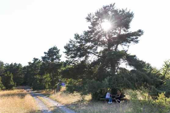 1500-5-Bank-mit-Baum-Gegenlicht