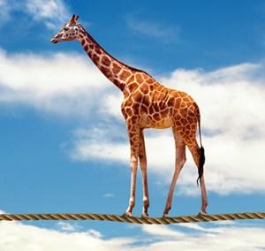 Girafe, symbole de la CNV