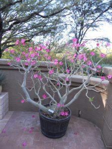 Tucson Botanical Gardens 11-3-12 with Krysti 062