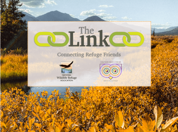 The Link — Fall 2020 Newsletter