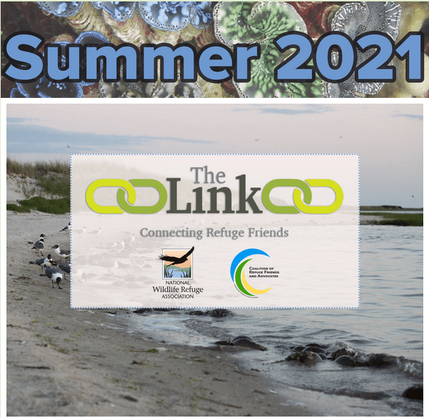 Read more about the article The Link — Summer 2021 Newsletter