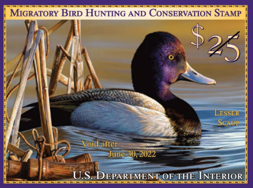 2021-2022 Federal Duck Stamp image