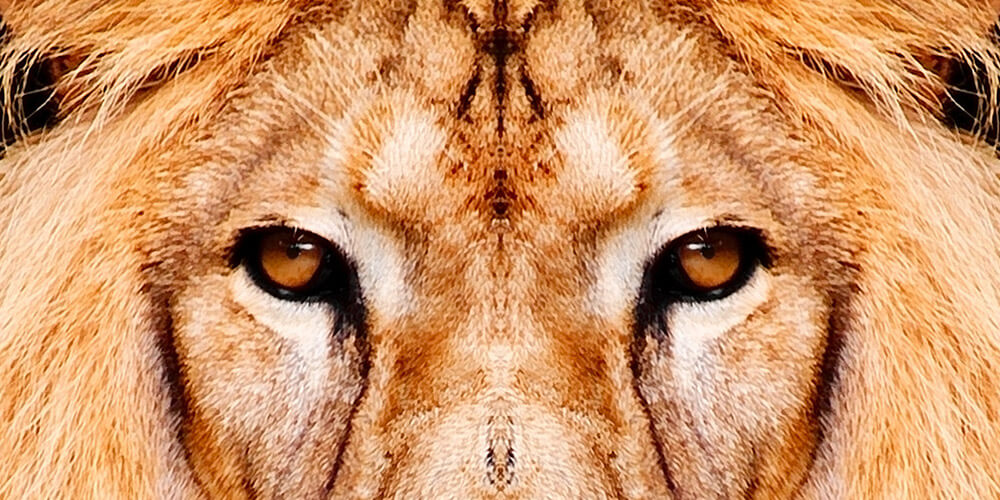 wildlife-header