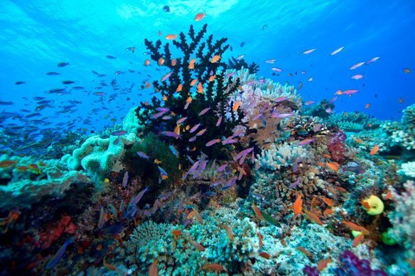 'Street-View' Comes to the World's Coral Reefs | Coastal Care