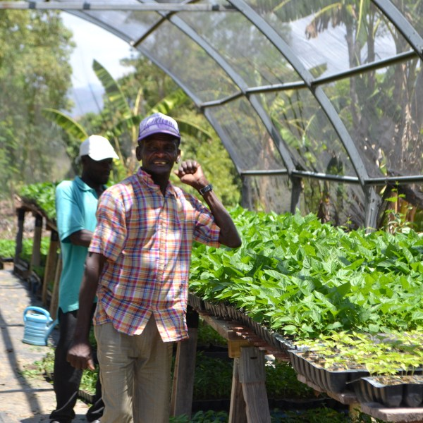 men in greenhouse with Tabasco peppers