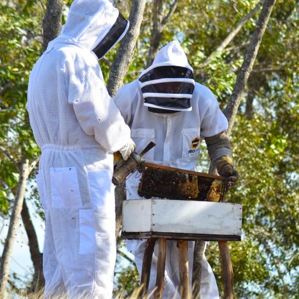 two men examining bee box
