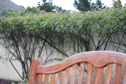 winery vines:chair*