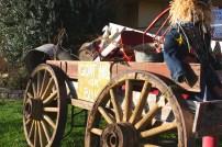 coastal/goat wagon