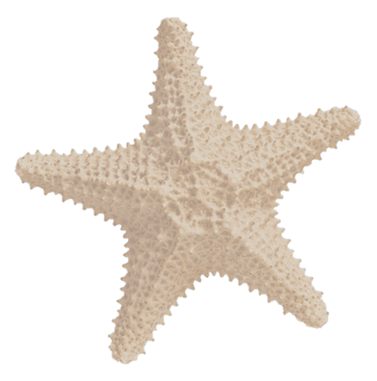 Foto Estrela do mar