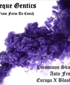 Aeque genetics Poisonous Skunk OG for Coastal Mary Seeds