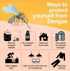 dengue 11