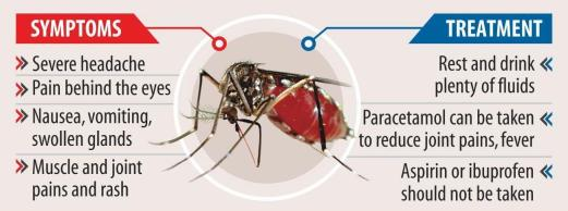 dengue 14