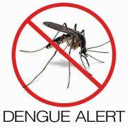 dengue 21