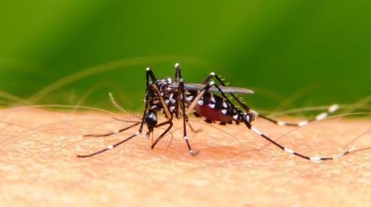 dengue 4