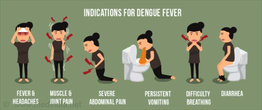 dengue 7