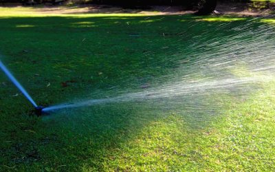 When Can I Water My Lawn?