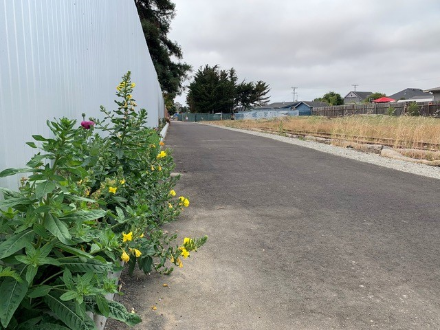 Read more about the article Growing up in Santa Cruz: The future of Santa Cruz – Rail and Trail would be best