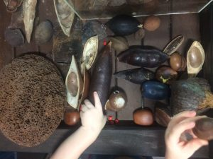 Kids playing with Daintree rainforest items