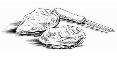 oysters-hand-drawn-large