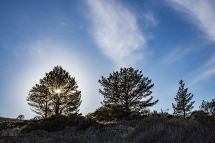 The late afternoon sun shines through the trees near the crest of the trail. Dawn Page/CoastsideSlacking