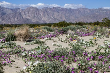 Desert Garden. Dawn Page/CoastsideSlacking