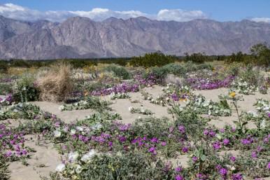 Desert Garden. Dawn Page/CoastsideSlacking