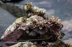 Tide pool at Fitzgerald Marine reserve in Moss Beach. Dawn Page/CoastsideSlacking