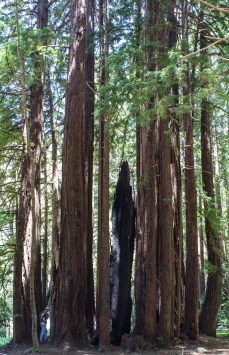 Hiking in the redwoods at Pfeiffer Big Sur State Park. Dawn Page / CoastsideSlacking