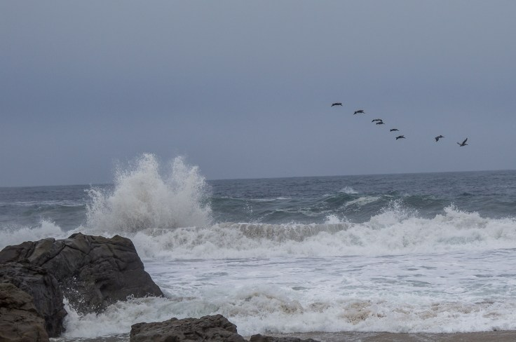 Wild waves and a flock of pelicans at Garrapata State Beach. Dawn Page/CoastsideSlacking
