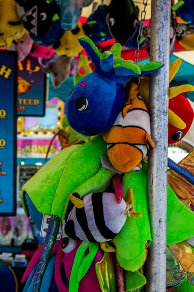 Prizes at the San Mateo County Fair. Dawn Page/CoastsideSlacking
