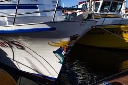 Pillar Point Harbor. Dawn Page/CoastsideSlacking
