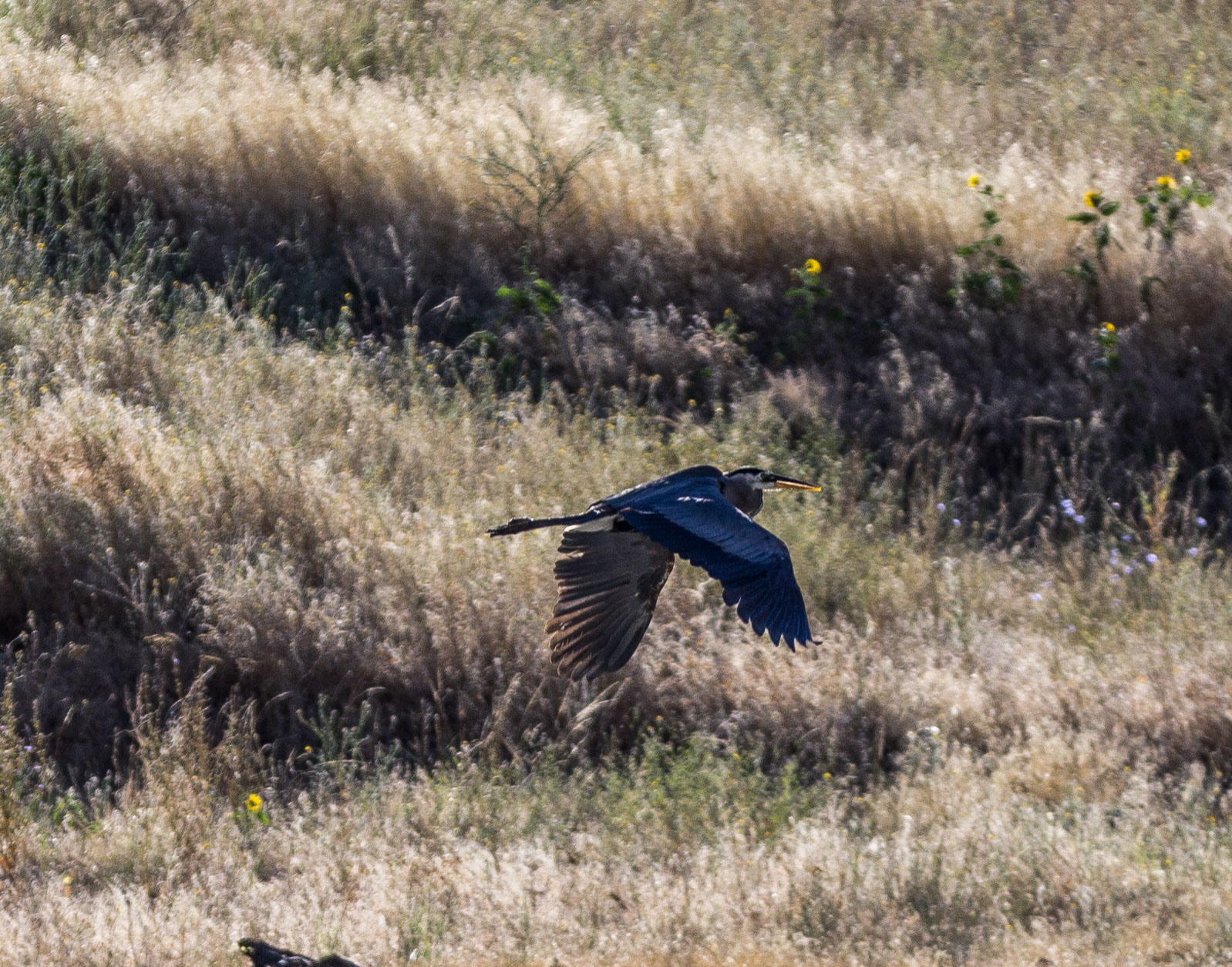 A blue heron paces our jet boat as we cruise up the Snake River. Dawn Page / CoastsideSlacking