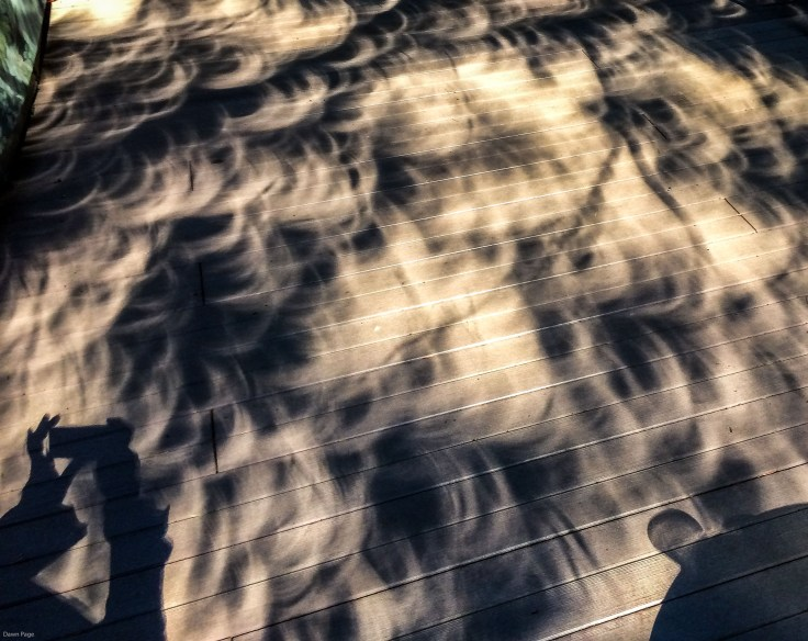 Weird shadows of Douglas fir boughs during the solar eclipse. Dawn Page / CoastsideSlacking