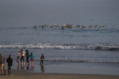 Beachgoers check out the feeding frenzy action at Surfer's Beach near Half Moon Bay. Dawn Page / CoastsideSlacking