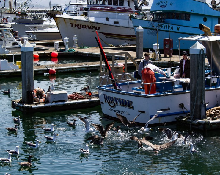 20170910 - fishermans festival-IMG_0315