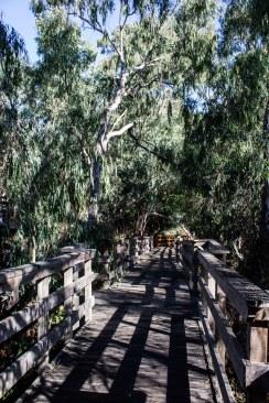 Boardwalk at Natural Bridges State Park in Santa Cruz. Dan Page / CoastsideSlacking.
