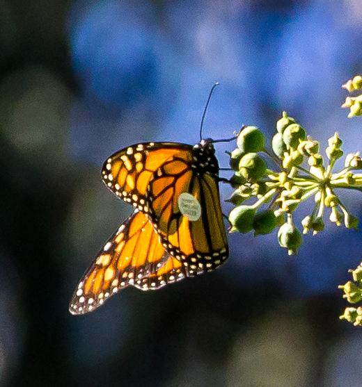 20171114 - monarch preserve-IMG_1147