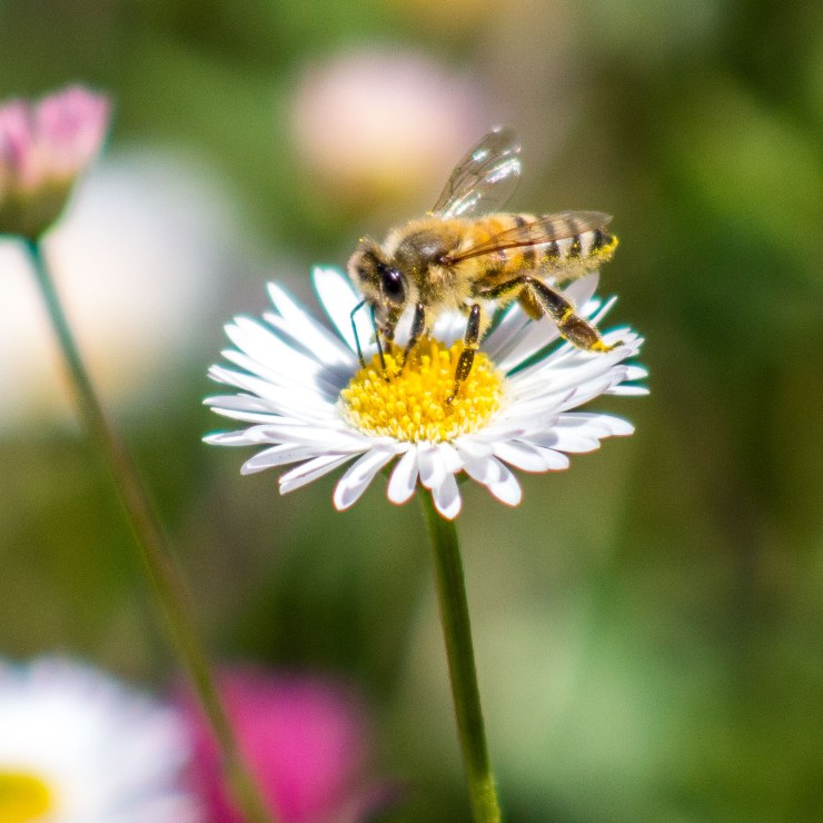 bees-IMG_2145