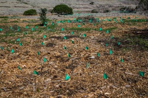 Habitat Restoration. Montara Mountain Dawn Page / CoastsideSlacking