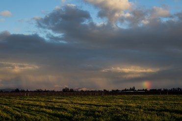 A persistent rainbow beckons us to the Blossom Trail near Fresno, CA. Dawn Page / CoastsideSlacking