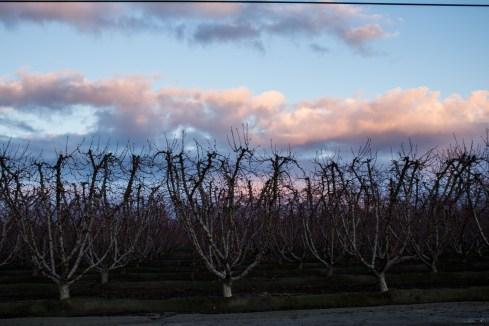 Orchards near bloom and a bonus sunset along the Blossom Trail near Fresno, CA. Dawn Page / CoastsideSlacking